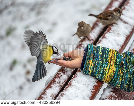 The Great Tit Eats Seeds From A Palm Of Little Boy. Hungry Bird Great Tit Eating Seeds From A Hand D