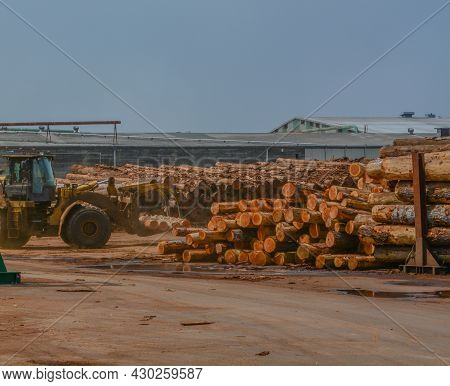 Logs Stacked At The Lumber Mill Ready To Be Cut Into Lumber. Located In Eureka, Humboldt County, Cal