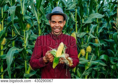 Joyful Farmer Agronomist Looking At Camera And Peeling Corn Ear On The Cob. Ripe Maize Environmental