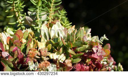 Succulent Plants Collection, Gardening In California, Usa. Home Garden Design, Diversity Of Various