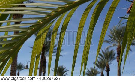 Palms In Los Angeles, California, Usa. Summertime Aesthetic Of Santa Monica And Venice Beach On Paci
