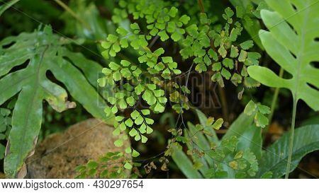Subtropical Forest In California Usa. Fresh Springtime Morning Atmosphere, Green Bright Wood, Sunny