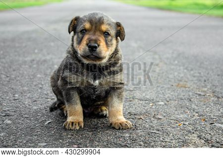 One Puppy Are Sitting On The Road. Abandoned Puppies Concept. Orphan Puppies. Call For Help For Pets
