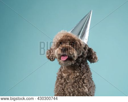 Happy Dog In A Festive Cap. The Chocolate Poodle Like Toy. Curly Pet On Party
