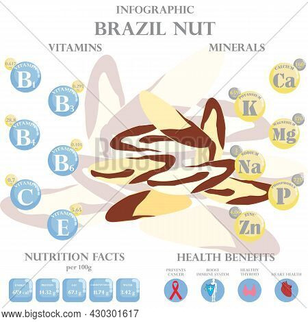 Infographic About Nutrients In Brazil Nuts. Vector Illustration Of Brazil Nuts, Vitamins, Nuts, Heal