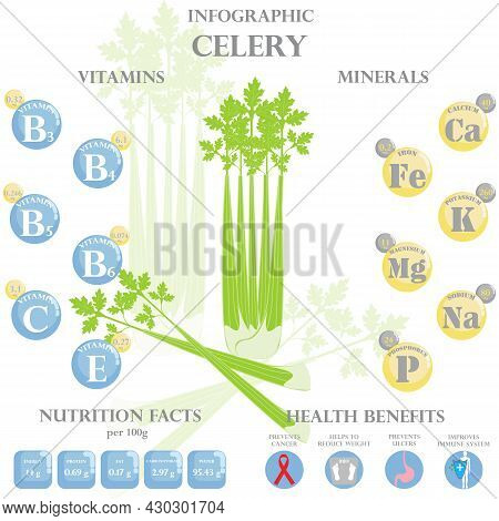 Infographic About Nutrients In Celery. Vector Illustration Of Celery, Vitamins, Vegetables, Healthy
