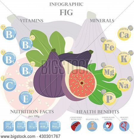 Infographic About Nutrients In Fig. Vector Illustration Of Fig, Vitamins, Fruits, Healthy Food, Nutr