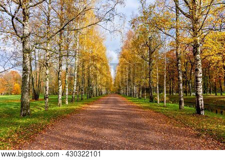 Birch Alley In Alexander Park In Autumn, Tsarskoe Selo (pushkin), Saint Petersburg, Russia