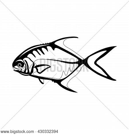 Permit  Fish , Vector Illustration, Flat Style, Side View, Lining Draw