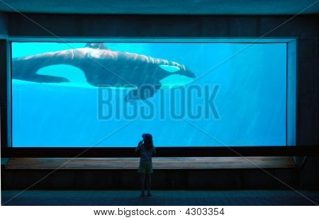 a child standing in front of an aquarium with a whale swimming past poster