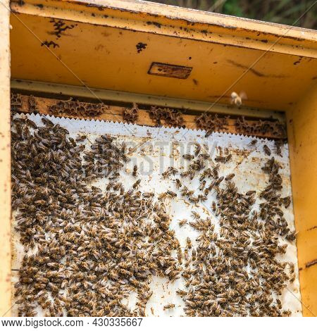Open Hive Body With Bees Swept Off The Honeycomb By A Honey-collecting Beekeeper