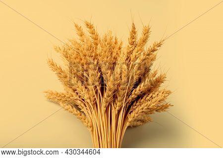 Bushy Sheaf Of Rye On Yellow Background. Harvesting Concept.