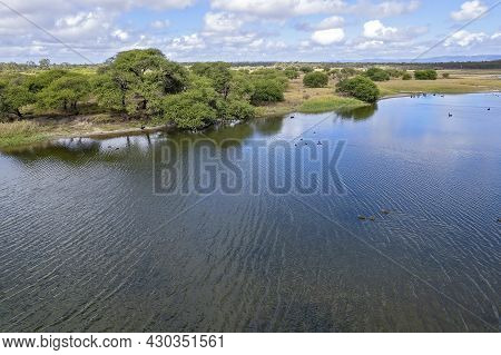 Aerial View Of Swans And Ducks Swimming On A Wetlands Reserve