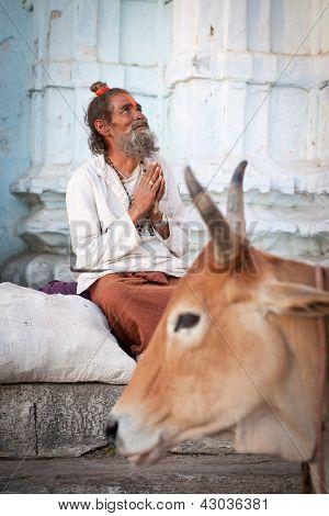 Heiliger Mann und Kuh außerhalb Tempel