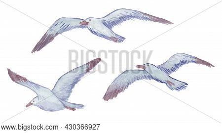Three Vector Flying Seagulls Stylized As Watercolor. Set Of Drawn Sea Birds Isolated On White Backgr