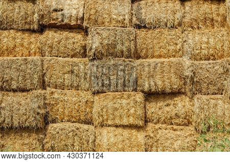 Warehouse Of Rectangular Bales Of Hay. The Uneven Texture Of A Stack Of Dry Straw Collected For Anim
