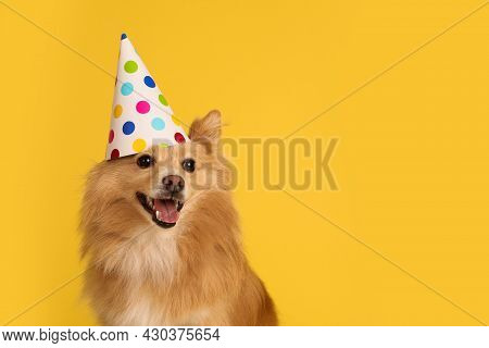 Cute Dog With Party Hat On Yellow Background, Space For Text. Birthday Celebration