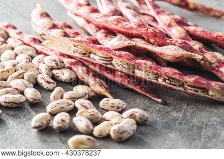 Cranberry beans. Borlotti beans. Beans pods on kitchen table.