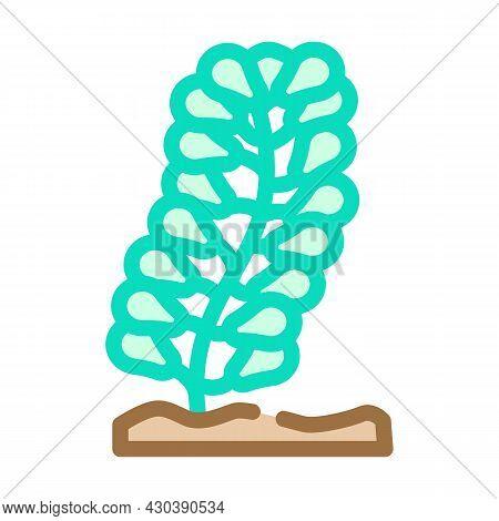 Caulerpa Lentillifera Seaweed Color Icon Vector. Caulerpa Lentillifera Seaweed Sign. Isolated Symbol