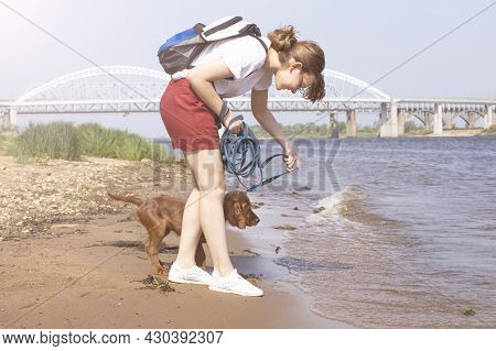 Caucasian Girl Walks With A Little Irish Red Setter Puppy On The River Bank On A Sunny Day.