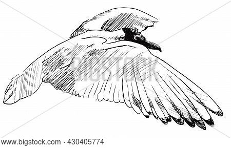 Flying Bird. Sketch Of Seagull Hand Drawn Vector Doodle Illustration