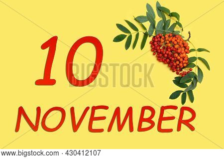 10th Day Of November. Rowan Branch With Red And Orange Berries And Green Leaves And Date Of 10 Novem