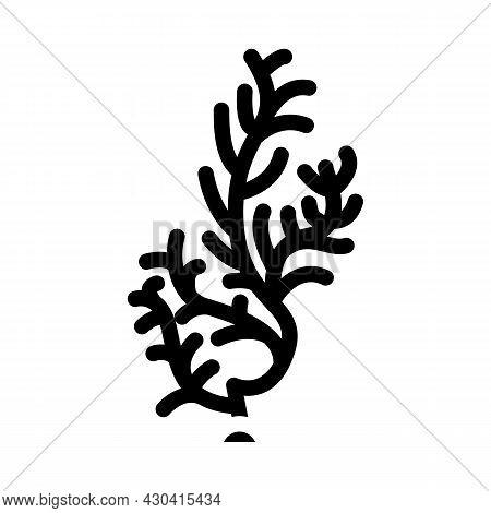 Cladophora Glomerata Seaweed Glyph Icon Vector. Cladophora Glomerata Seaweed Sign. Isolated Contour