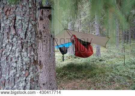Two Hammocks Hang Under A Waterproof Canopy, In The Forest, At The Camp.