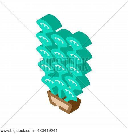 Aquarium Algae Seaweed Isometric Icon Vector. Aquarium Algae Seaweed Sign. Isolated Symbol Illustrat