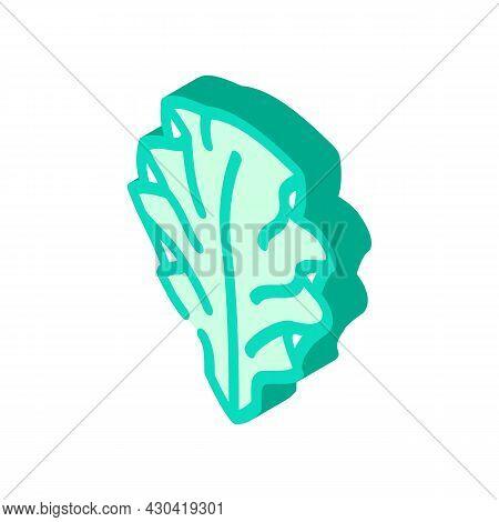 Ulva Lettuce Seaweed Isometric Icon Vector. Ulva Lettuce Seaweed Sign. Isolated Symbol Illustration