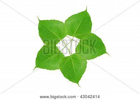 Flower Leave