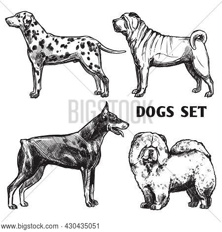 Sketch Dogs Portrait Set With Dalmatian Doberman Shar-pei And Chow Chow Profiles Isolated Vector Ill