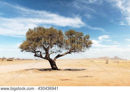 Tupical landscape of Namibia, Africa. Single acacia tree, desert and mountains on background and yellow savanna with blue sky background