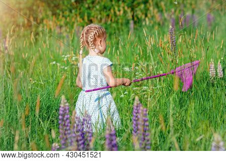 Little Girl Is Catching Butterfly By Net At Green Meadow In Sunny Summer Day