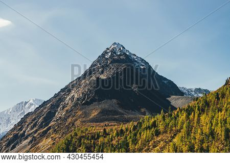 Scenic Mountain Landscape With Sunlit Golden Larches Trees And High Snowy Sharp Pinnacle In Sunny Da