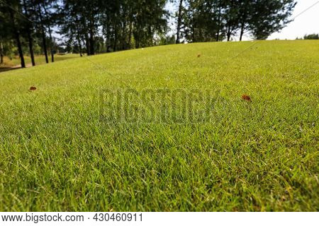 Green Grass On A Golf Course, Lens Flare On Sun Set Evening Time
