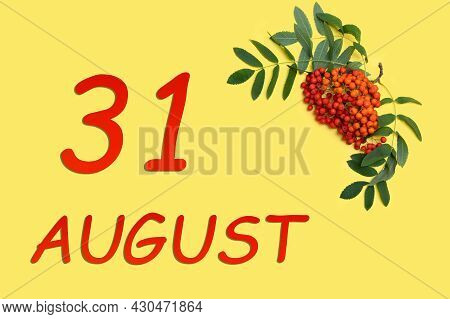 31st Day Of August. Rowan Branch With Red And Orange Berries And Green Leaves And Date Of 31 August