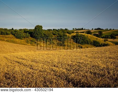 A Countryside Scenery Of Golden Hilly Fields. Sunny, Summer Day, Blue Sky. Background With Copy Spac