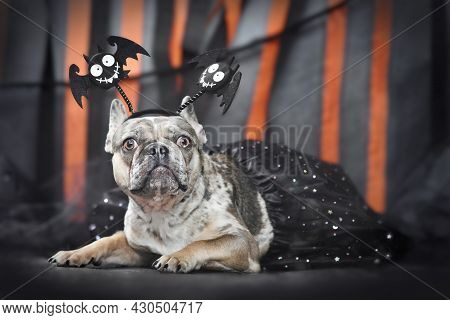 Merle French Bulldog Dog Wearing Halloween Bat Costume Headband And Tutu In Front Of Black And Orang