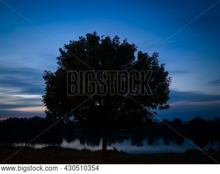Tree Silhouette On Riverbank During Evening Blue Hour In Long Exposure