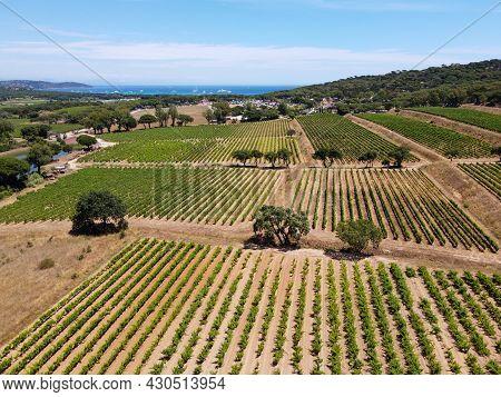 Winemaking In  Department Var In  Provence-alpes-cote D'azur Region Of Southeastern France, Aerial V