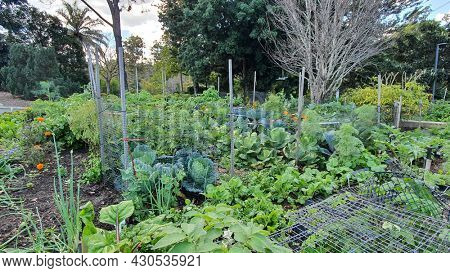 Vegetable Gardens,  Mt Cootha Botanical Gardens, Brisbane Australia
