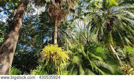 Palm Trees and Ferns,  Mt Cootha Botanical Gardens, Brisbane Australia