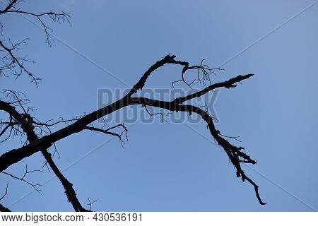 Spooky Tree Branches Against Blue Sky In The Afternoon