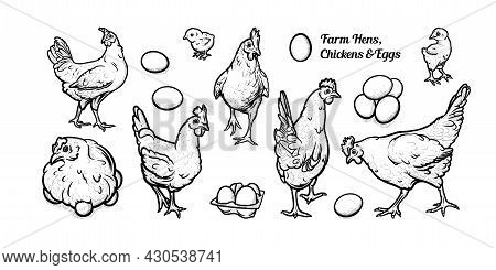 Free Grazing Hens With Eggs And Chickens. Set Of Egg-laying Hens. Hand Drawn Vector Illustration
