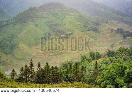 Rice Terraces In The Fog In Sapa, Vietnam. Rice Fields Prepare The Harvest At Northwest Vietnam. Vie