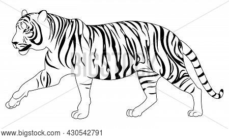 Abstract Illustration With Walking Tiger In Line Art Style.