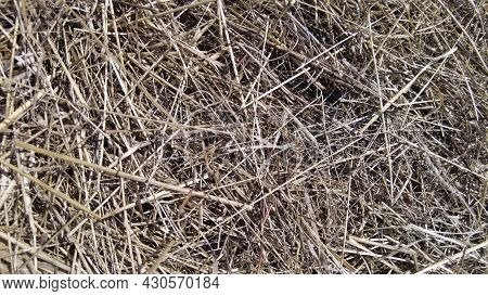 Farm Background, Hay Or Straw Texture, Pale Yellow Color. Dried Grass Backdrop. Dry Wheat Pile.