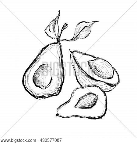 Set Of Avocado Seamless Drawing. Fruit And Diet Illustrations. Line Art