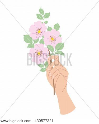 Female Hand Holding Tender Branch Of Blooming Dog-rose. Simple Woman Hand With Delicate Pink Flowers